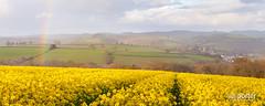 Oil Rape Seed field (www.neilporterphotography.com) Tags: flower field yellow farm farming seed rape crop oil