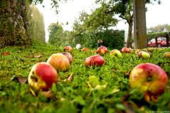 Copyright  Arnaud PAVIC 2015 - Tous Droits Rservs (arnaud.p86) Tags: france green apple grass de ile pommes vert 91 pomme herbe essonne