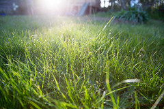 123/366 - Time for a mow (roblee.photography) Tags: sunset sunlight green oneaday grass garden lawn may photoaday pictureaday 2016 bladesofgrass project365 ef24105mmf4lisusm project365123 canoneos6d project36502may16