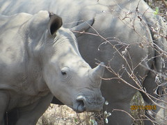 Zimbabwe (206) (Absolute Africa 17/09/2015 Overlanding Tour) Tags: africa2015