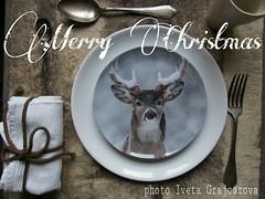 Merry Christmas (belair_22) Tags: beige neve inverno natale forchetta atmosfera freddo marrone fiocco tazza panna cervo piatto cucchiaio tovagliolo corda pellicia