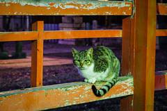 Today's Cat@2016-01-05 (masatsu) Tags: cat pentax cc100 catspotting mx1 thebiggestgroupwithonlycats