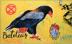 Street Art (Mabacam) Tags: streetart london wall graffiti stencil mural eagle wildlife wallart urbanart shoreditch freehand publicart aerosolart spraycanart stencilling eastend bateleur endangeredspecies threatenedspecies mutiny 2016 zimbabwebird endangeredbird urbanwall lovewildlife