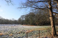 Winter, country side Drenthe