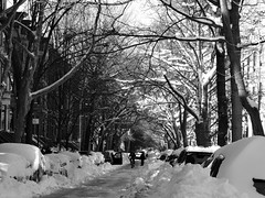 Snowy Park Slope (black and white) (Sammy!) Tags: nyc winter blackandwhite snow monochrome brooklyn buildings snowstorm january parkslope blizzard residential slope 2016 whitetrees aftersnowstorm blizzardjonas