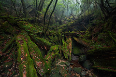 The Fallen Ones (Eddie HBH) Tags: mist green abandoned rain japan zeiss forest moss yakushima distagon2815