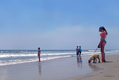 Brian_OBX Beach Dog 1 LG_062815_2D (starg82343) Tags: ocean sea vacation people woman dog sexy wet water hat animal lady female puppy outside outdoors nc sand pretty waves child gorgeous sandy northcarolina canine gal bikini foam coastline recreation leash activity 2d picturesque outerbanks seashore eastcoast k9 brianwallace atantic