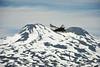 Condor en vuelo (vikylandia) Tags: chile del de nikon laguna condor montaña chillan nevados huemul