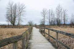 Elgin Park, Surrey, BC (ScarletBlack) Tags: boardwalk elginpark