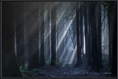 Enchanted Passage (Maclobster) Tags: park sun forest golden moody ears trail beams enchanted incline keithgrajala