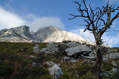 DSC_8313 (adrizufe) Tags: summer nature landscape ilovenature ngc bluesky paisaje bizkaia basquecountry lonelytree anboto atxondo durangaldea nikonstunninggallery aplusphoto adrizufe adrianzubia