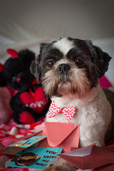 Be Mine (Beth in NorCal) Tags: arty letters ddc valentinesday2016