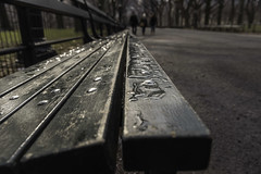 Day 126/365 (Alexander Marte Reyes) Tags: park city newyorkcity trees people lines bench centralpark themall cityaprk