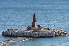 Gaviotas en casa (LL Poems) Tags: sea seagulls nature island mar spain europe mediterranean mediterraneo cormorant gaviotas cormoran