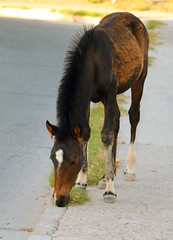 Horse (christianhaward) Tags: horse caf animal animals caballo eat equine comiendo equino
