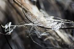 IMG_9229 (nitinpatel2) Tags: marco patel nitin