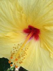 Cayena: La flor de mi ciudad
