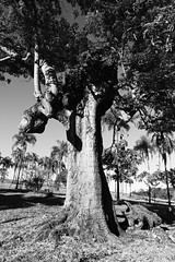 Tree (5814) (Jorge Belim) Tags: flora pb paisagem árvore