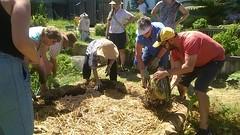 No-Dig Gardening
