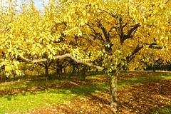 Herbstfarben (izoll) Tags: sony herbst gelb landschaft bume herbstfarben herbstfrbung landschaftsaufnahmen alpha380 izoll