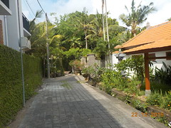 DSCN1787 (petersimpson117) Tags: pererenan pengembungan
