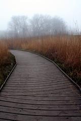 Wetland walk (scott_steelegreen) Tags: uk england mist canon sussex gloomy walk country atmosphere wetlands eos350d lewes