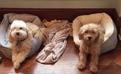 Liesel's Eddie with his sister!