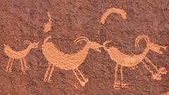 Ovis canadensis (bclee) Tags: utah petroglyph rockart bighornsheep