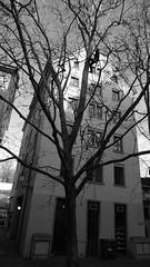 P1100644 (arborist.ch) Tags: tree baum treeclimbing arborist treecare baumpflege arboriculture