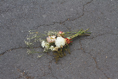 Its hard to let go (@m.lartigue) Tags: flowers broken dead heartbroken