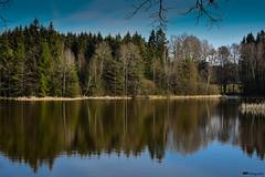 reflection... (vreny_) Tags: wood reflection tree nature water landscape austria sterreich nikon wasser natur teich landschaft wald spiegelung baum magicmoments natureshot nikond750