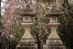 20160302-090815_5K_80 (pya) Tags: kyoto  kitano  tenmangu