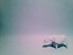 Oso polar (aronnypivaral) Tags: bear art paper oso origami arte guatemala polar papel paperfolding papiroflexia xela quetzaltenango monterroso pivaral aronny
