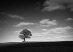 Monochrome Monaghan (eddieELM) Tags: ireland shadow sky blackandwhite bw irish tree monochrome clouds canon landscape mono sycamore solitary 1740 lonetree irlanda illuminate irlande monaghan 600d scotshouse eos600d rebelt3i kissx5 eddieelm