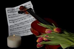 Music (Trumfa) Tags: flower candle flor violin tulip tulipa musicsheet partitura espelma viol