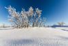 Cotton Land (photosenvrac) Tags: hiver neige nordik motoneige 2016 finlande laponie thierryduchamp