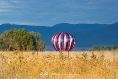 Canberra Balloon Spectacular 2016 (Ruth Spitzer) Tags: balloons nsw newsouthwales canberra hotairballoons act 2016 ruthspitzer canberraballoonspectacular ruthspitzerphotography 2016march
