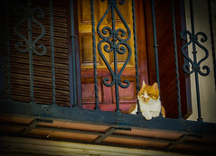 Watching the World Go By (Explore) (Colormaniac too (trying to catch up)) Tags: city travel urban animal architecture cat outside spain cityscape balcony watching textures granada curious andalusia observer flypaper