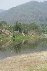 Butterflies! (kcosgrove) Tags: mai chiang