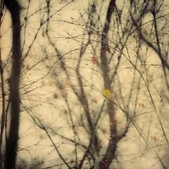 yellow bird in the wind (jd weiss) Tags: hasselblad500cm ektar100 sonnar250