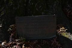 Planted by the Country Womens Association in 1947 at the Ballarat Botanical Gardens - sign (avlxyz) Tags: sign oak australia victoria botanicalgardens redoak ballarat fb2 quercuspalustris ballaratbotanicalgardens swampspanishoak pinkoak