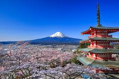 !! Spot  Mt.Fuji (printout ver.) (JB ) Tags: mountain lake japan canon fuji cherryblossom  sakura fujisan lightup prefecture region ef2470mmf28lusm mtfuji kawaguchi yamanashi chubu            ef1635mmf28liiusm koshinetsu 5dmki fujiyoshidashi 5dmkiii  ef70200mmf28lisiiusm jb