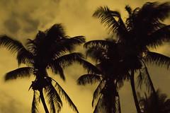 Wild Nights (dans eye) Tags: beach palms stars star flickr florida midnight fl starrynights junobeachpier starstudies