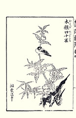 Rose-of-sharon and great tit (Japanese Flower and Bird Art) Tags: flower bird art japan japanese book major tit great picture hibiscus roseofsharon malvaceae kano toun woodblock nishimura parus syriacus paridae shigenaga readercollection