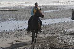 IMG_EOS 7D Mark II201604030514 (David F-I) Tags: horse equestrian horseback horseriding trailriding trailride ctr tehapua watrc wellingtonareatrailridingclub competitivetrailriding sporthorse equestriansport competitivetrailride april2016 tehapua2016 tehapuaapril2016 watrctehapuaapril2016