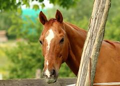 IMG_8970DPPgimp (marcel652016) Tags: animalidomestici