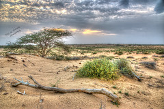 Life again after the rain! (Ali:18 ( )) Tags: sunset cloud nature countryside desert saudiarabia  jazan        jizan  sabiya