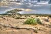 Life again after the rain! (Ali:18 (علي الطميحي)) Tags: sunset cloud nature countryside desert saudiarabia غروب jazan منظر السعودية غيوم طبيعة صحراء ريف مرعى jizan جيزان sabiya جازان صبيا الطمحة