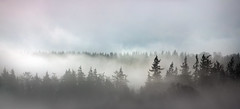 Treeline Mist (wentloog) Tags: park uk morning blue trees sky panorama cloud mist mountain tree field fog wales canon river landscape outdoors eos nationalpark spring britain pano hill cymru cardiff breconbeacons caerdydd 5d brecon beacons powys mkiii wentloog stevegarrington