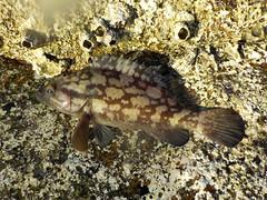 DSCN0119 (soma-samui.com) Tags: fish thailand kohsamui  fising